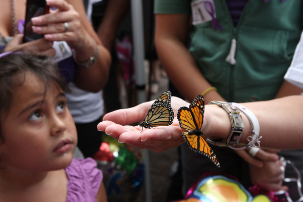Butterflies into nature