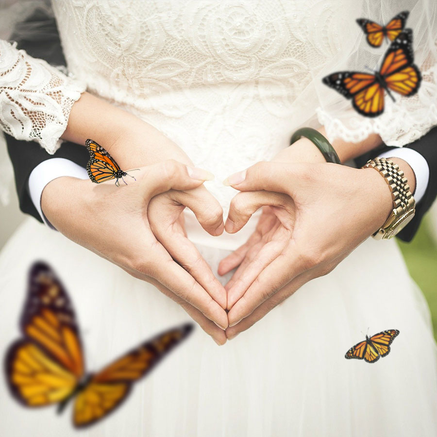 Live Wedding Butterfly Release Packages
