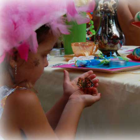 Special Occasions Butterfly Packages