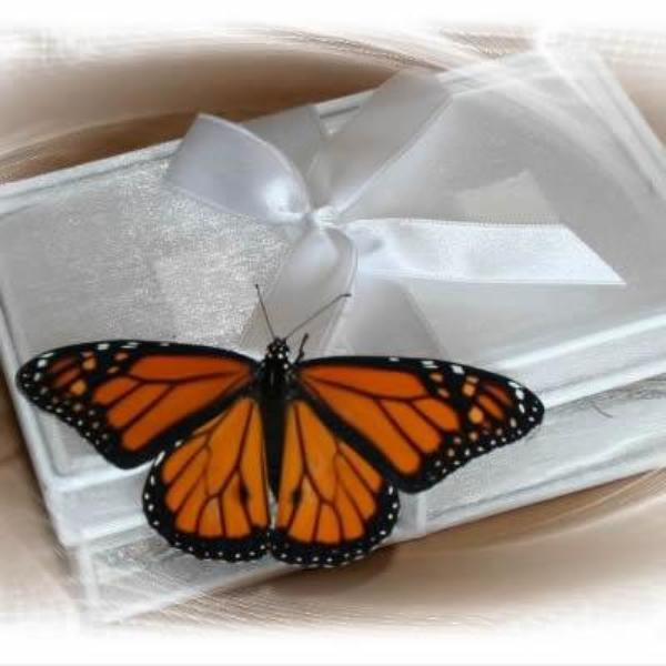 Accordion Butterfly Release Box - (Butterflies not included)