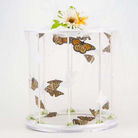 Large Release Cage - Add to any package for a mass release. (butterflies not included)