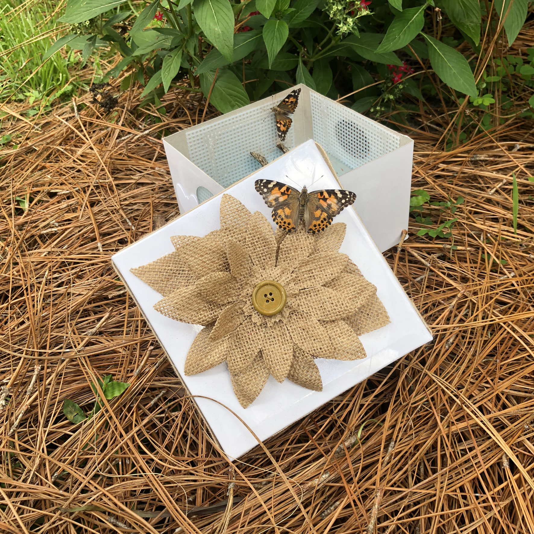 60 Painted Lady with Burlap Flower and Ribbon