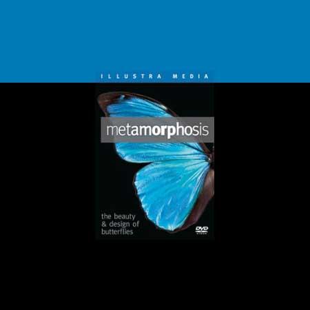 Metamorphosis DVD: The Beauty of Butterflies