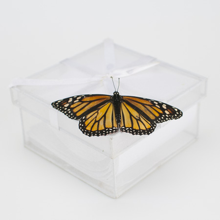 Accordion Butterfly Release Box
